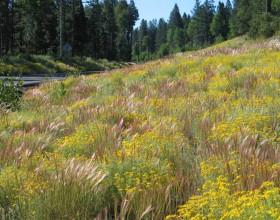 Chiloquin Highway, Oregon