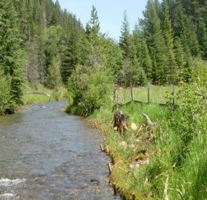 Block P Superfund Site MT - Creek Restoration 3 Years After