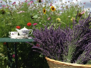 Tea Time In The Lavender Fields