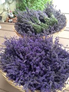 Lavender Harvest After Planter's Kit