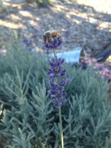 Pollination With A Little Help From Our Friends