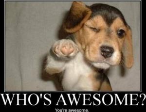 Awesome Beagle