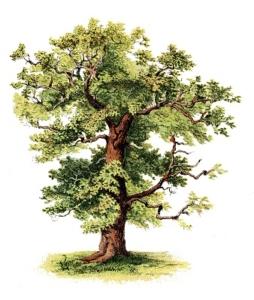 Green Tree4