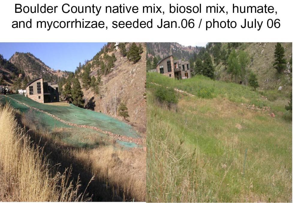 Mycorrhizae Boulder-rehab