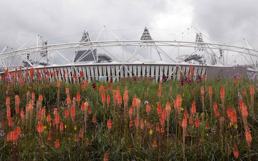 Mycorrhizae olympic-gardens2