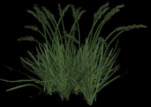 Tall Grass-8 (Large)