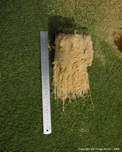 2004 Turf Trials - Treated