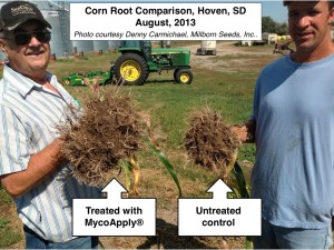 corn-roots-comparison-with-mycoapply