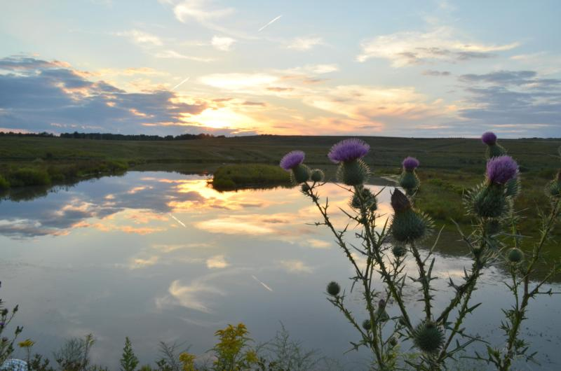 FLT 93 Memorial Park Wetlands